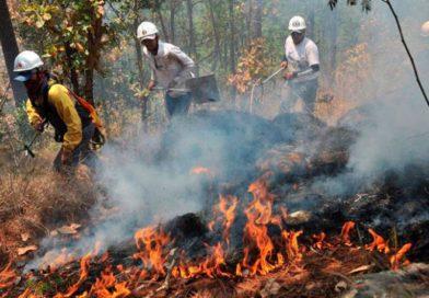 Incendios forestales consumen al menos 1,114 hectáreas de bosque en lo que va del 2020