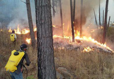 Bomberos combaten voraz incendio forestal en Zambrano