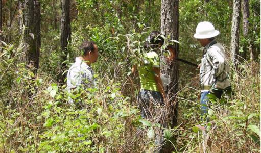 Denuncian tala de bosque en la montaña de Celaque