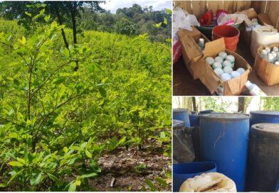 Las FFAA asegura narcolaboratorios y plantaciones de coca en Colón